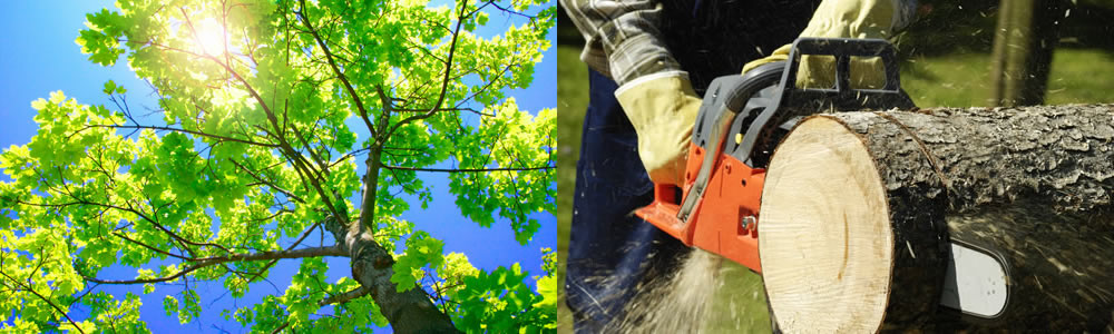 Tree Services Delmar